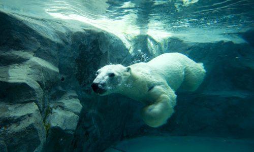 旭山動物園に学ぶ、建売住宅は行動展示で売れ!