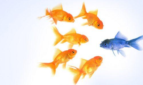 儲かる差別化に必要な3つの要素とは?